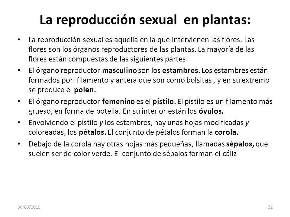 La reproducción sexual en plantas: