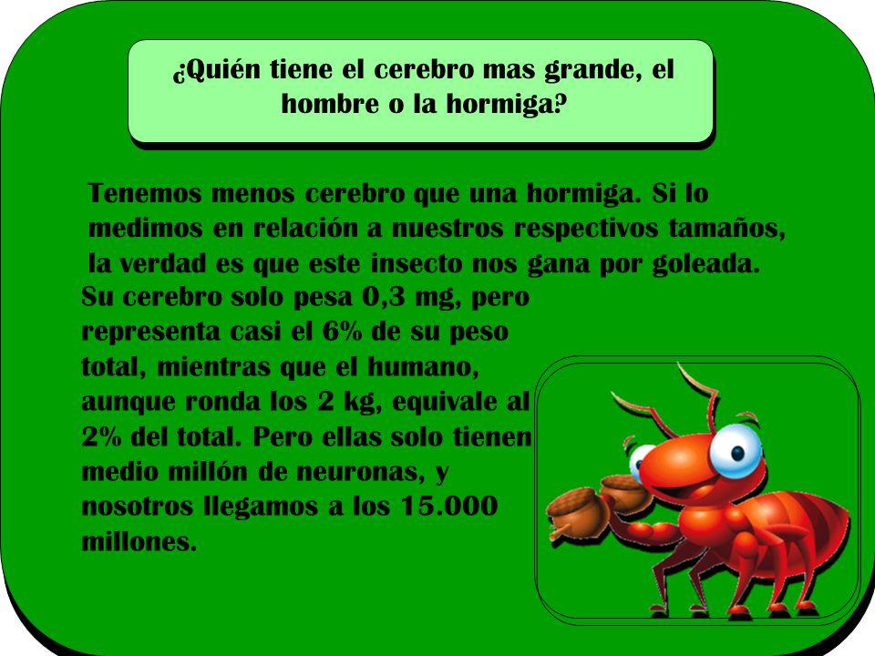 ¿Quién tiene el cerebro mas grande, el hombre o la hormiga