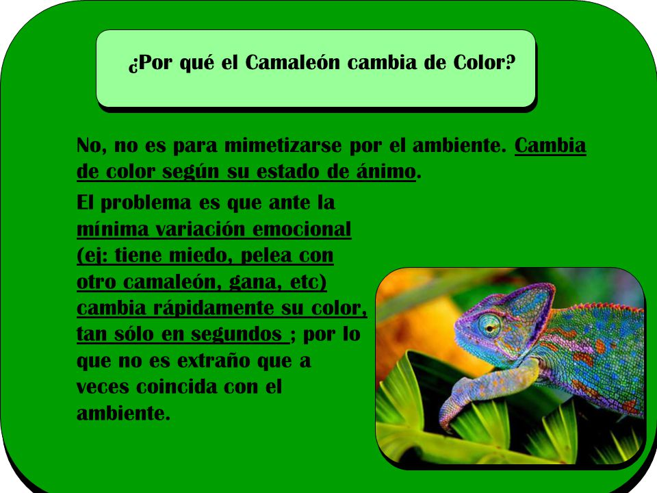 ¿Por qué el Camaleón cambia de Color