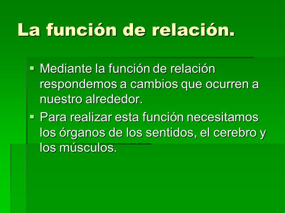 La función de relación. Mediante la función de relación respondemos a cambios que ocurren a nuestro alrededor.
