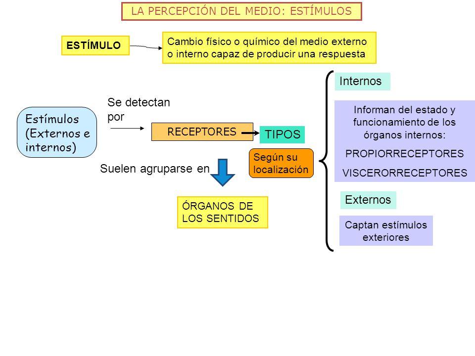 Estímulos (Externos e internos)