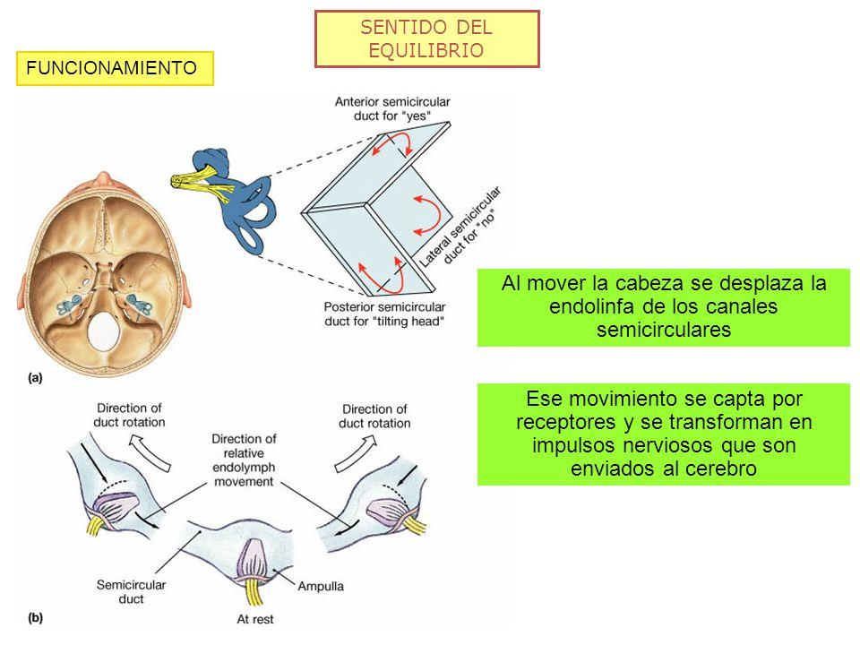SENTIDO DEL EQUILIBRIO