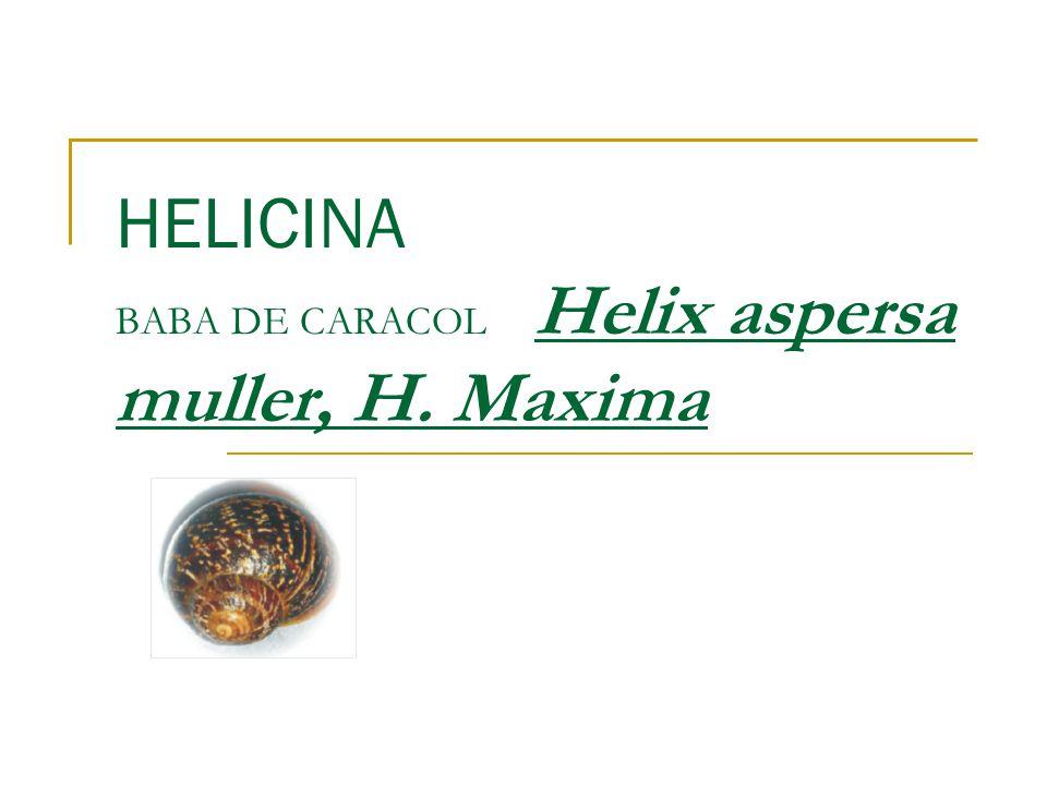 HELICINA BABA DE CARACOL Helix aspersa muller, H. Maxima