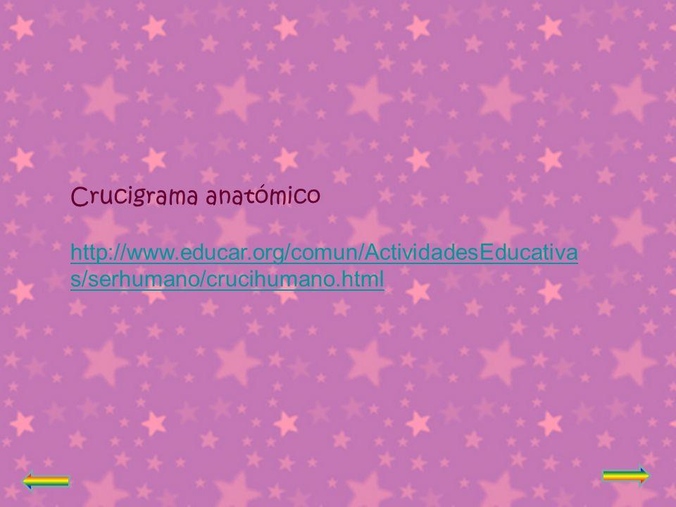 Crucigrama anatómico http://www.educar.org/comun/ActividadesEducativas/serhumano/crucihumano.html