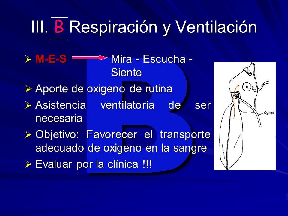 III. B Respiración y Ventilación