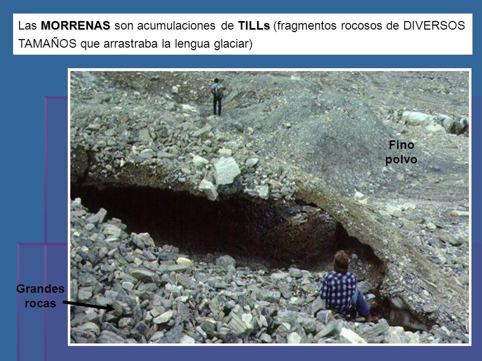 Las MORRENAS son acumulaciones de TILLs (fragmentos rocosos de DIVERSOS TAMAÑOS que arrastraba la lengua glaciar)