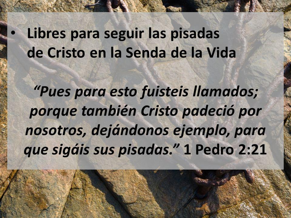 Libres para seguir las pisadas de Cristo en la Senda de la Vida