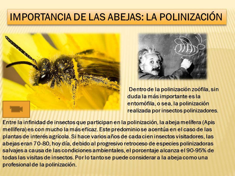 IMPORTANCIA DE LAS ABEJAS: LA POLINIZACIÓN
