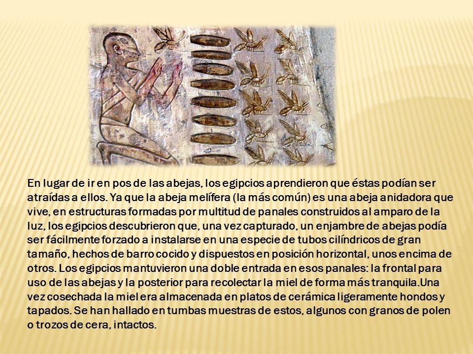 En lugar de ir en pos de las abejas, los egipcios aprendieron que éstas podían ser atraídas a ellos.
