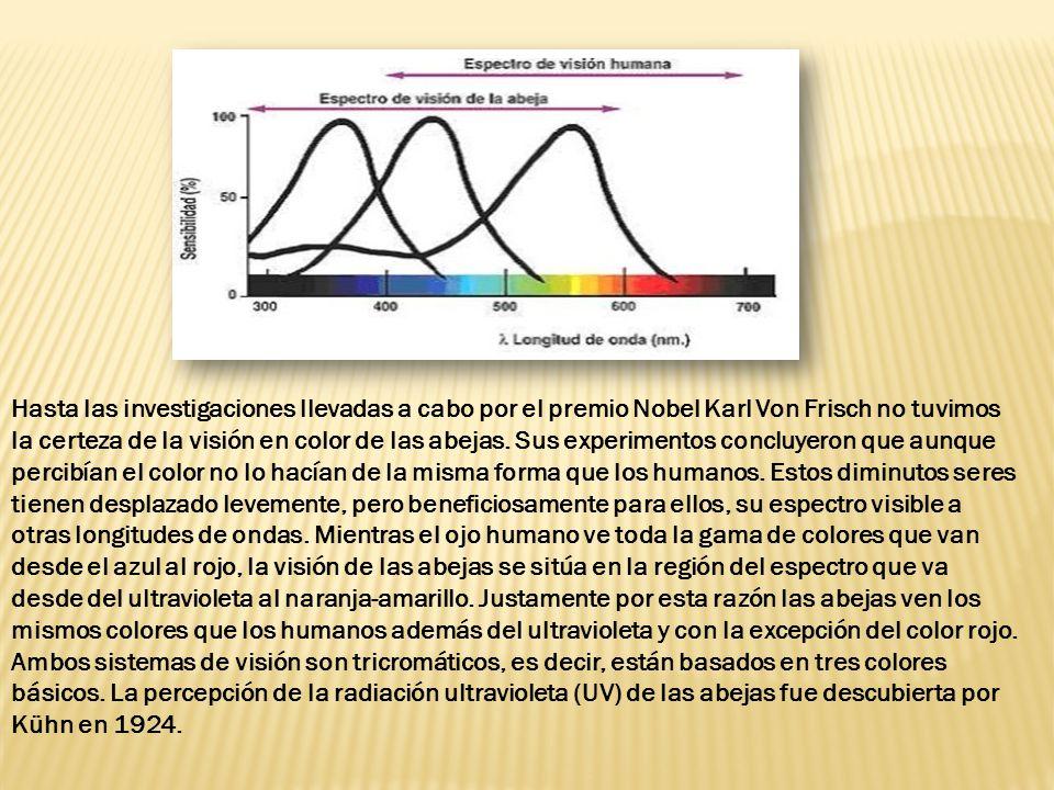 Hasta las investigaciones llevadas a cabo por el premio Nobel Karl Von Frisch no tuvimos la certeza de la visión en color de las abejas.