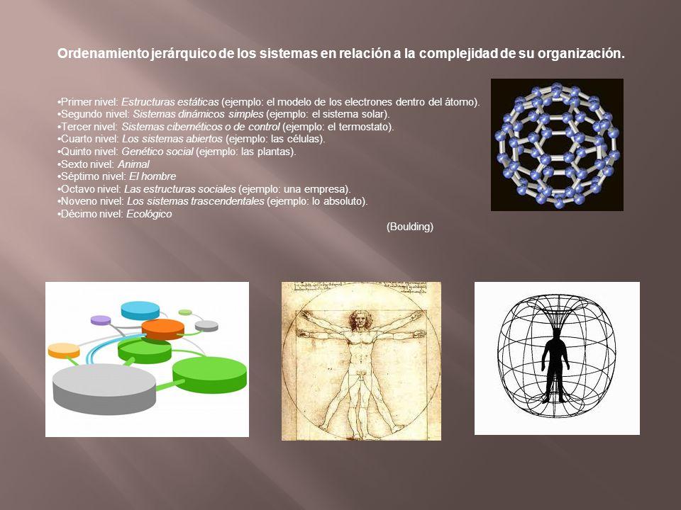 Ordenamiento jerárquico de los sistemas en relación a la complejidad de su organización.