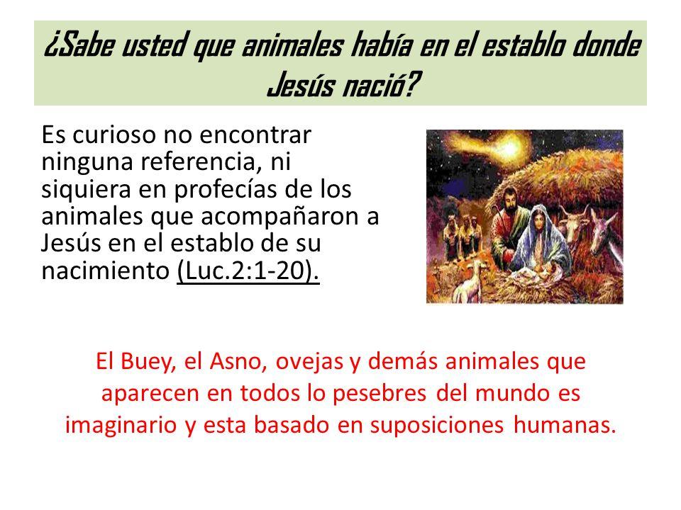 ¿Sabe usted que animales había en el establo donde Jesús nació