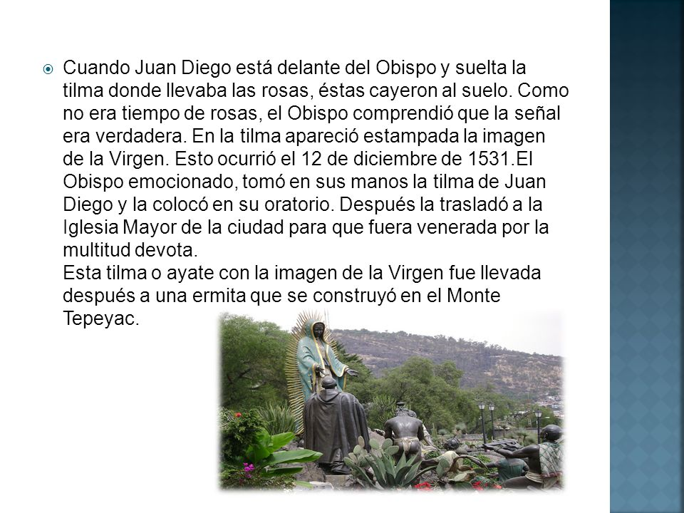 Cuando Juan Diego está delante del Obispo y suelta la tilma donde llevaba las rosas, éstas cayeron al suelo.