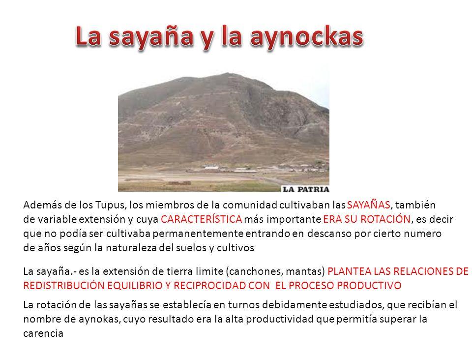 La sayaña y la aynockas Además de los Tupus, los miembros de la comunidad cultivaban las SAYAÑAS, también.