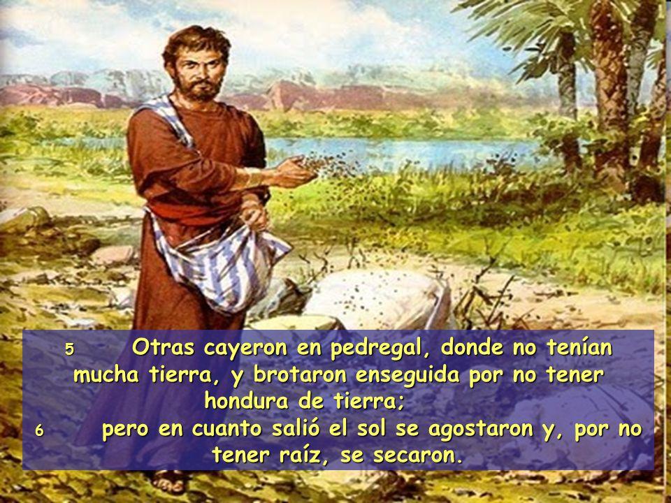 5 Otras cayeron en pedregal, donde no tenían mucha tierra, y brotaron enseguida por no tener hondura de tierra;