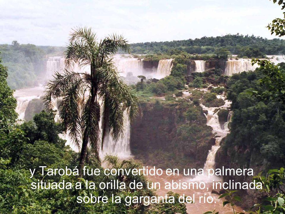 y Tarobá fue convertido en una palmera situada a la orilla de un abismo, inclinada sobre la garganta del río.