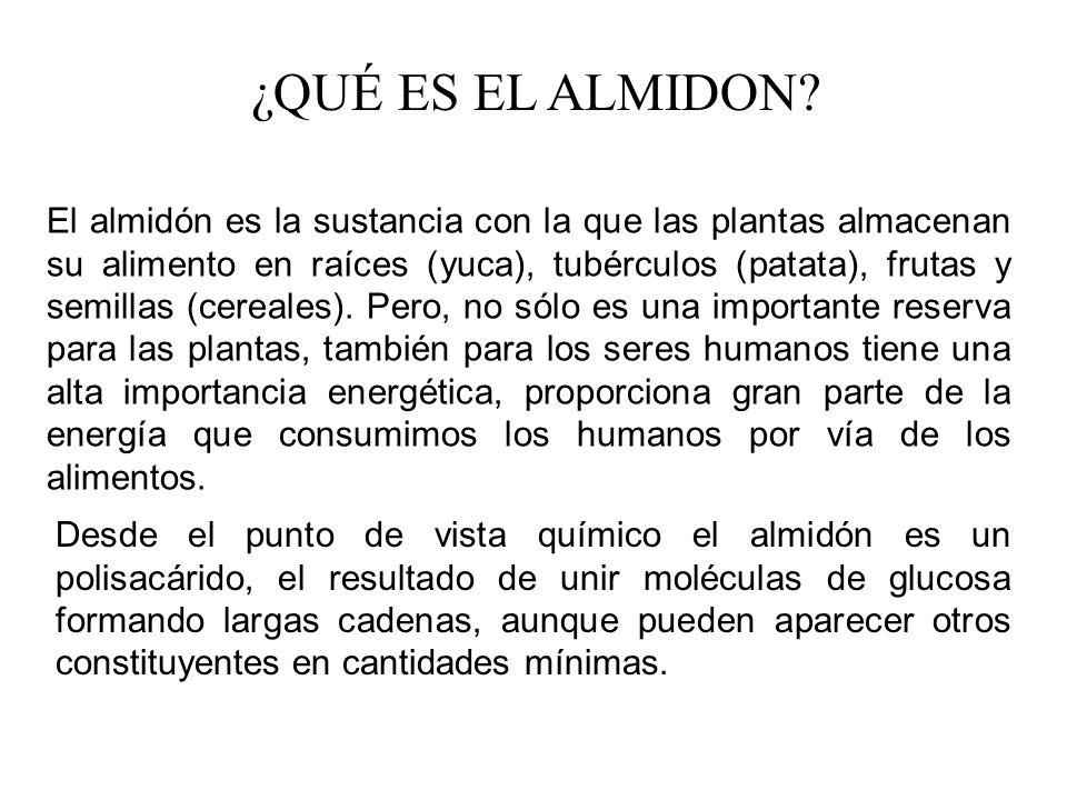 ¿QUÉ ES EL ALMIDON