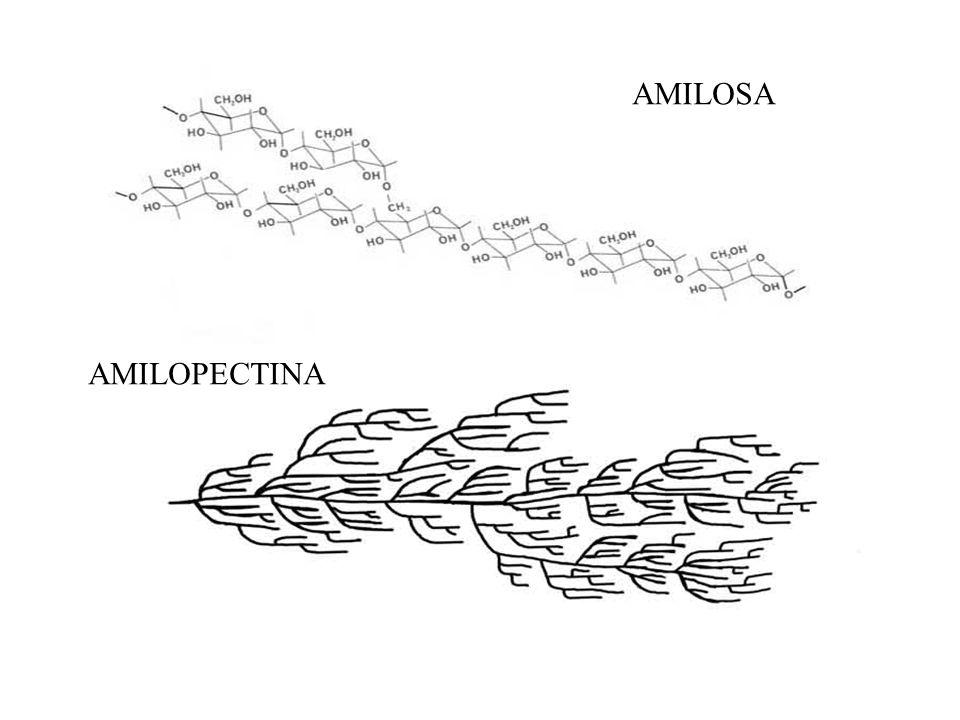 AMILOSA AMILOPECTINA