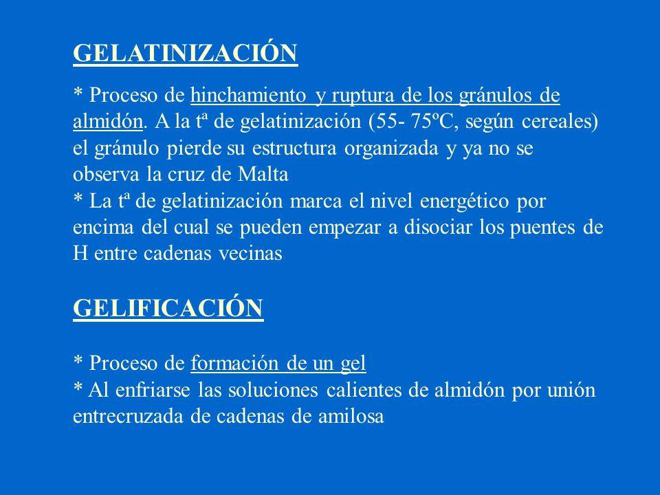 GELATINIZACIÓN
