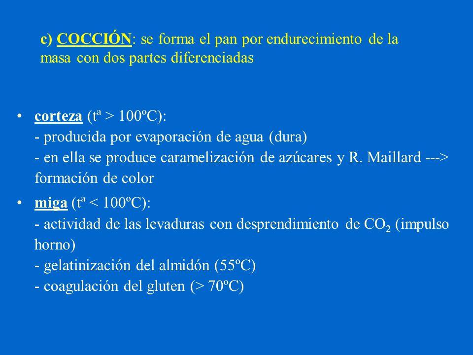 c) COCCIÓN: se forma el pan por endurecimiento de la masa con dos partes diferenciadas