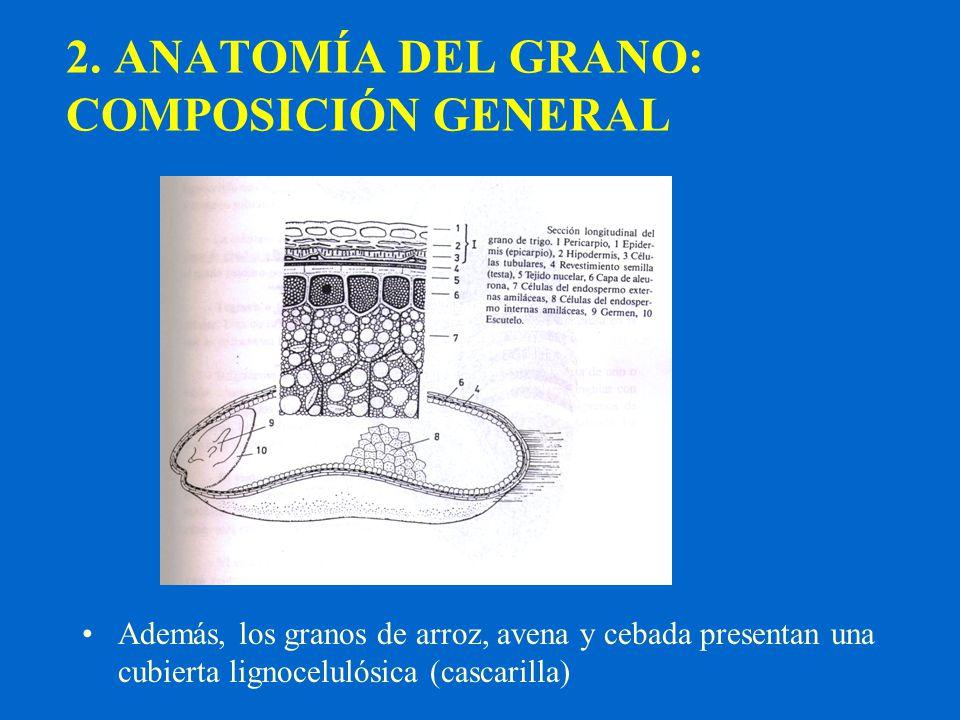 2. ANATOMÍA DEL GRANO: COMPOSICIÓN GENERAL