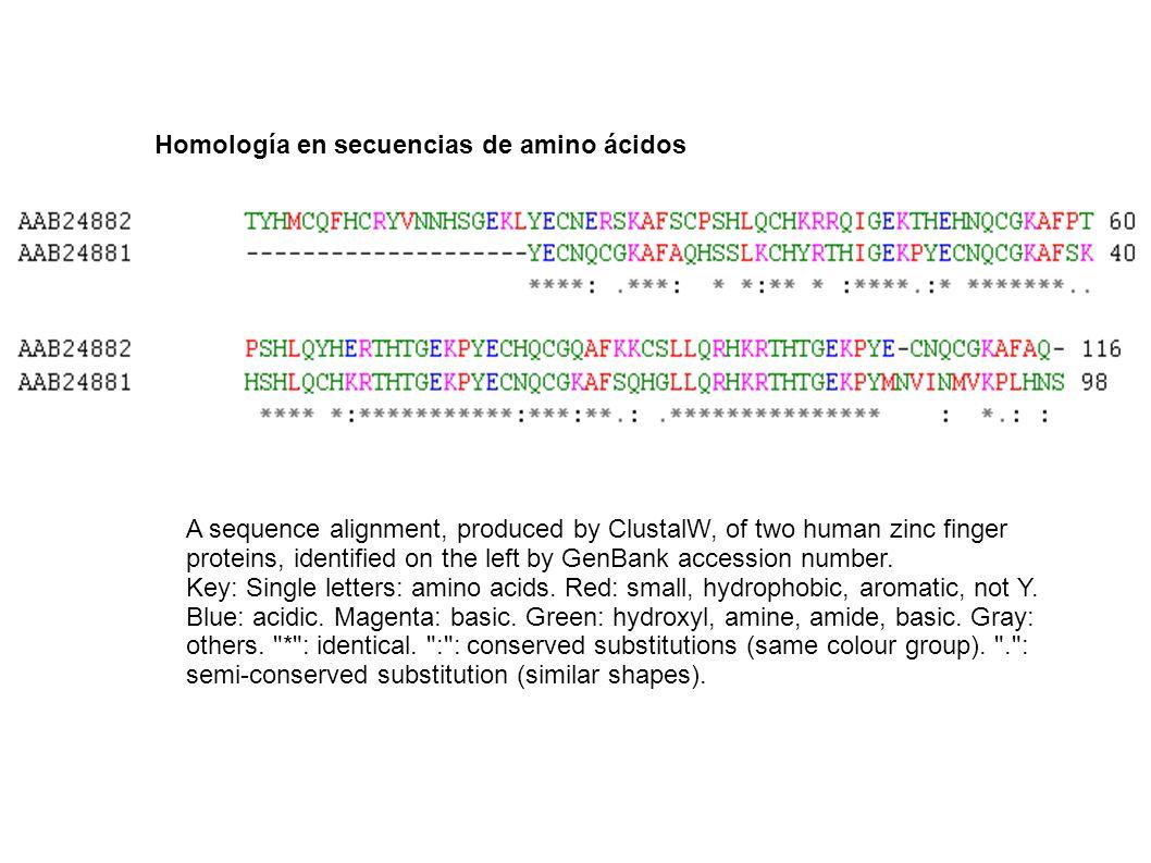 Homología en secuencias de amino ácidos