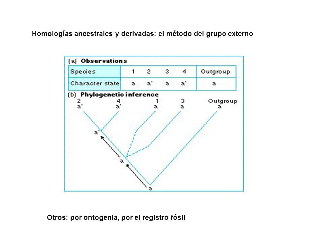 Homologías ancestrales y derivadas: el método del grupo externo