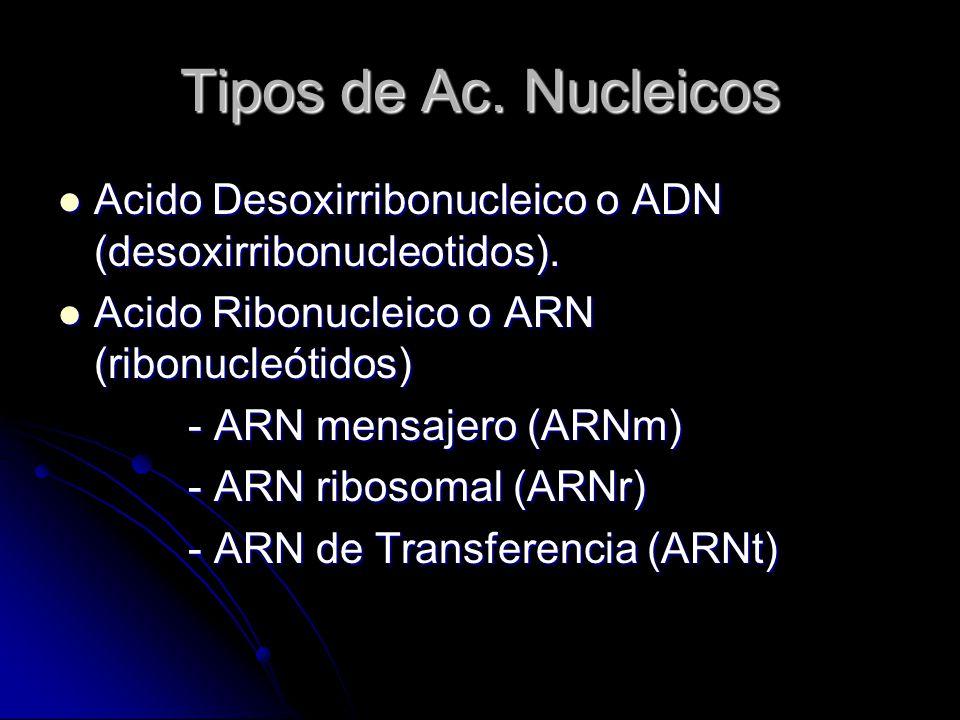 Tipos de Ac. Nucleicos Acido Desoxirribonucleico o ADN (desoxirribonucleotidos). Acido Ribonucleico o ARN (ribonucleótidos)