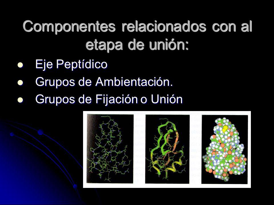 Componentes relacionados con al etapa de unión: