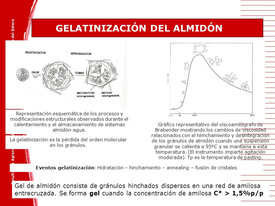 GELATINIZACIÓN DEL ALMIDÓN