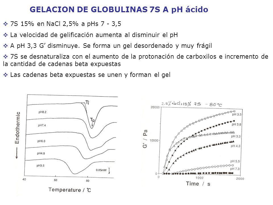 GELACION DE GLOBULINAS 7S A pH ácido