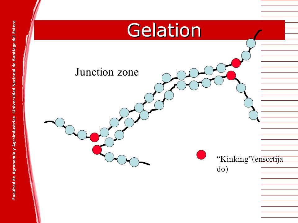 Gelation Junction zone Kinking (ensortijado)