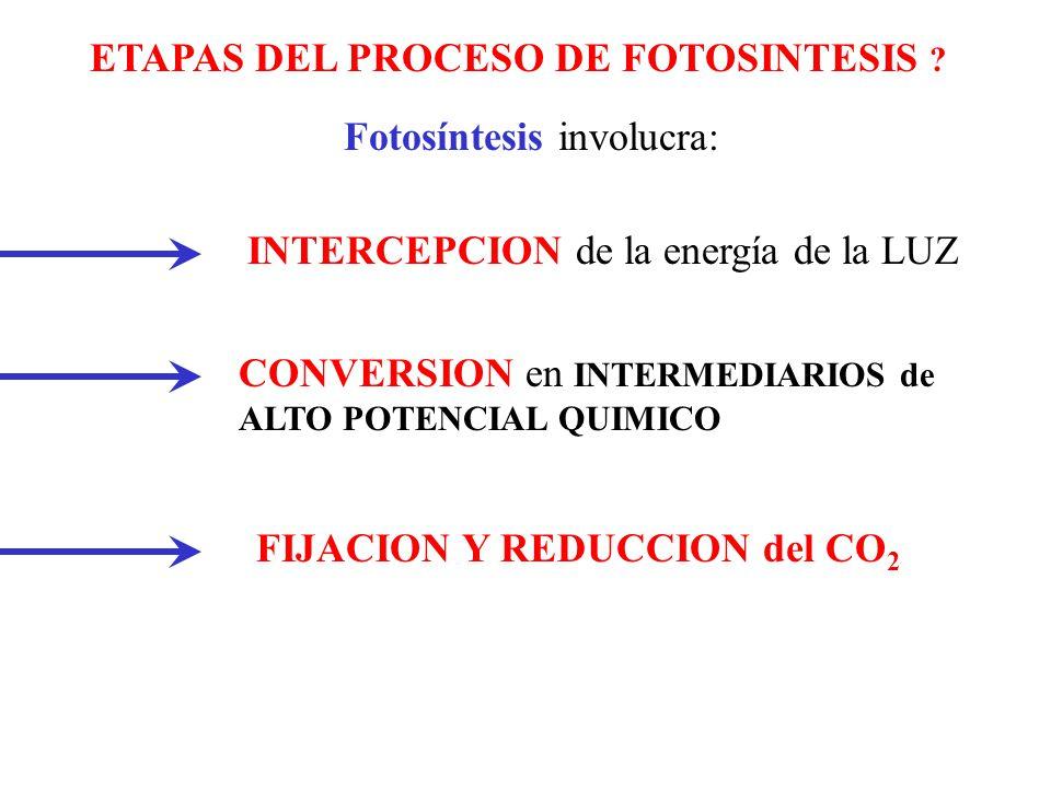 ETAPAS DEL PROCESO DE FOTOSINTESIS
