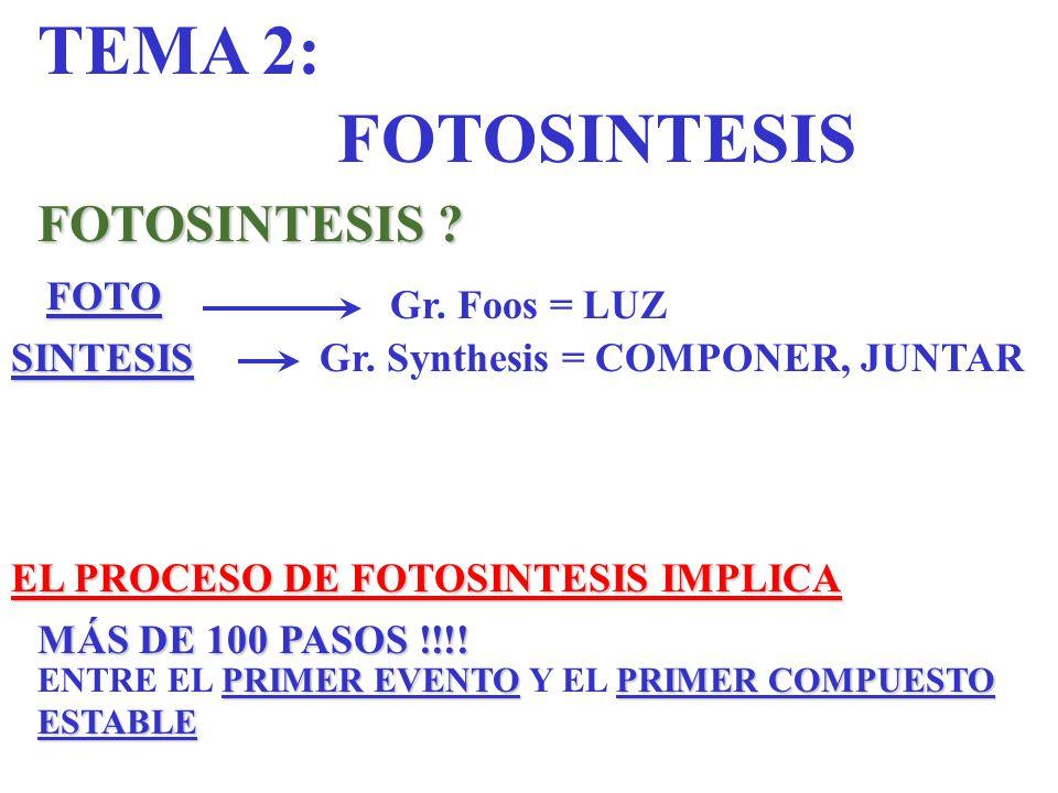 TEMA 2: FOTOSINTESIS FOTOSINTESIS FOTO Gr. Foos = LUZ SINTESIS