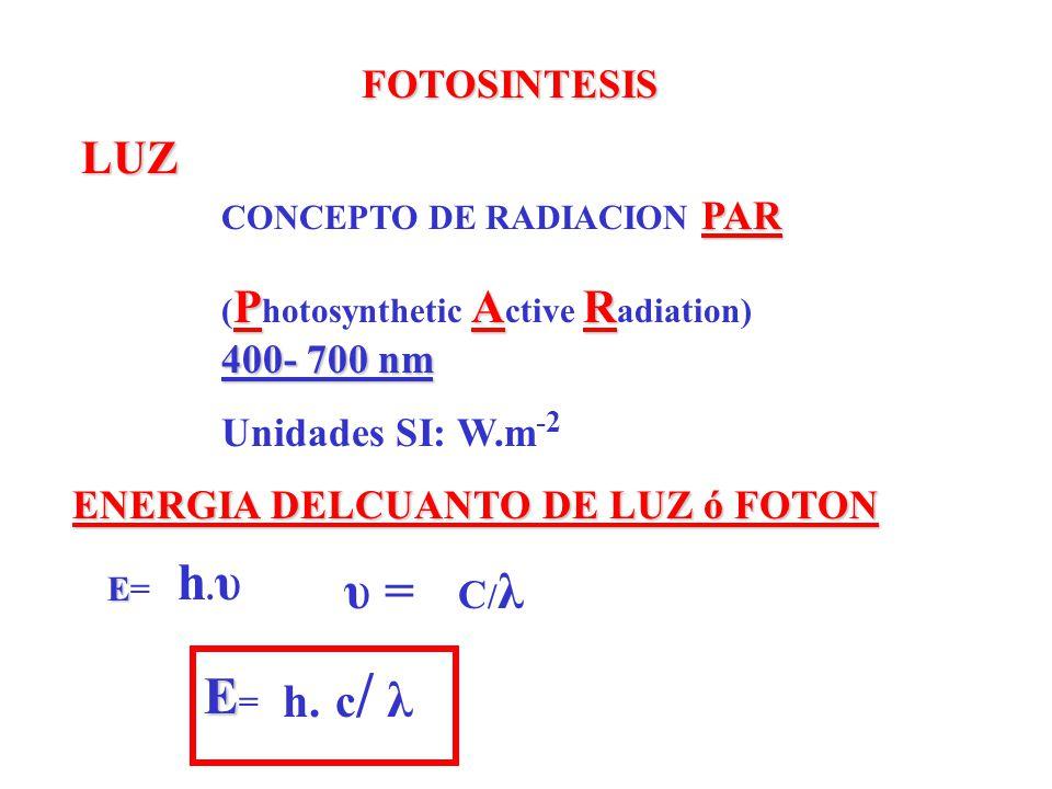 h.υ υ = E= LUZ c/ λ h. FOTOSINTESIS Unidades SI: W.m-2