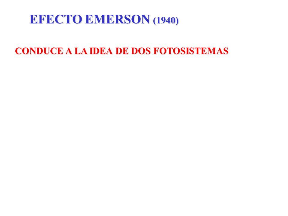 EFECTO EMERSON (1940) CONDUCE A LA IDEA DE DOS FOTOSISTEMAS
