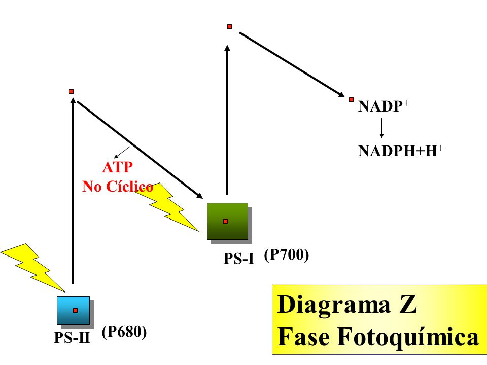 Diagrama Z Fase Fotoquímica NADP+ NADPH+H+ ATP No Cíclico (P700) PS-I