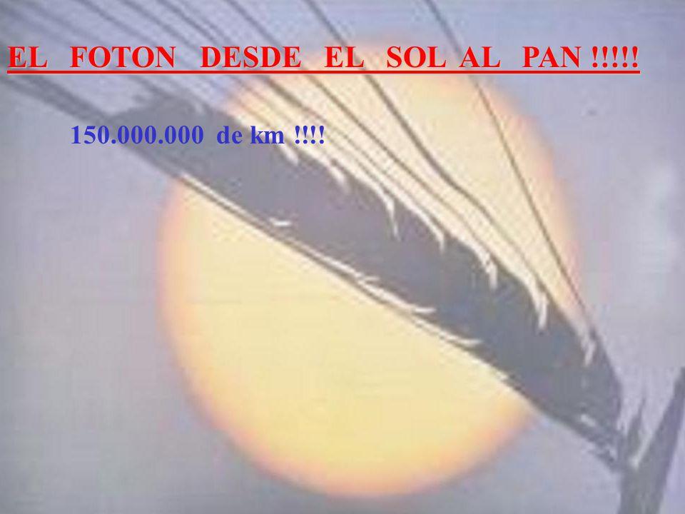 EL FOTON DESDE EL SOL AL PAN !!!!!