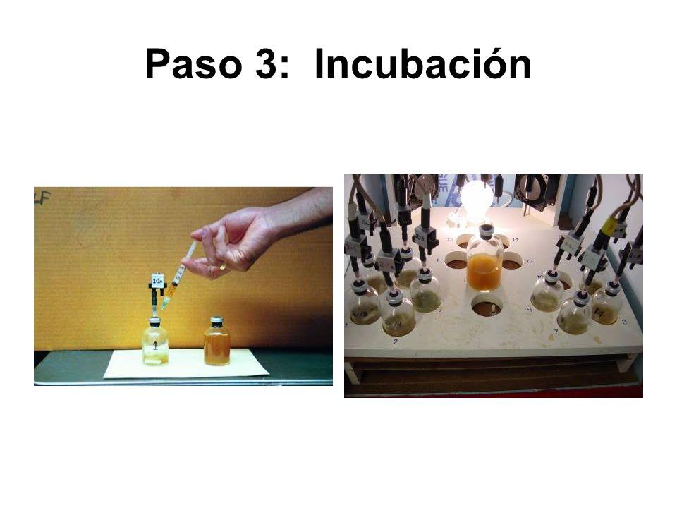 Paso 3: Incubación