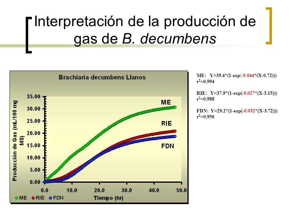 Interpretación de la producción de gas de B. decumbens