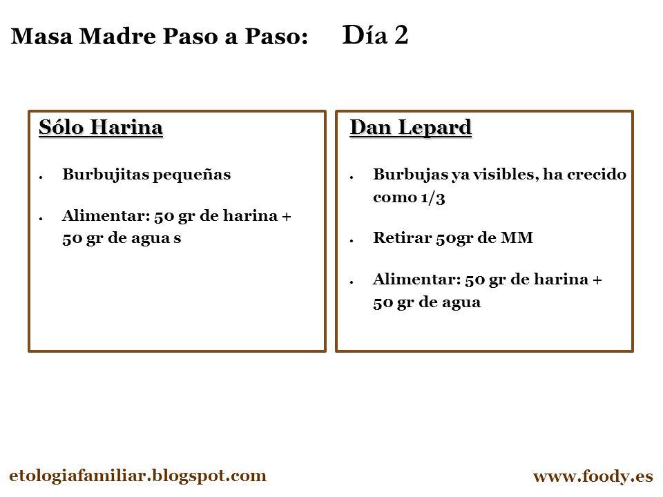 Masa Madre Paso a Paso: Día 2