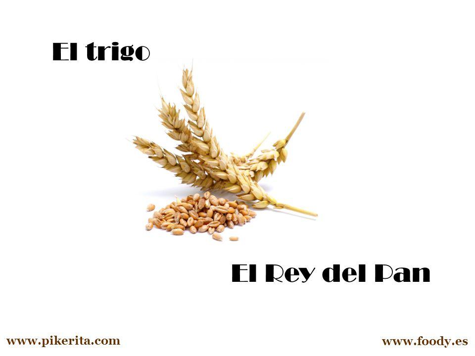 El trigo El Rey del Pan www.pikerita.com www.foody.es