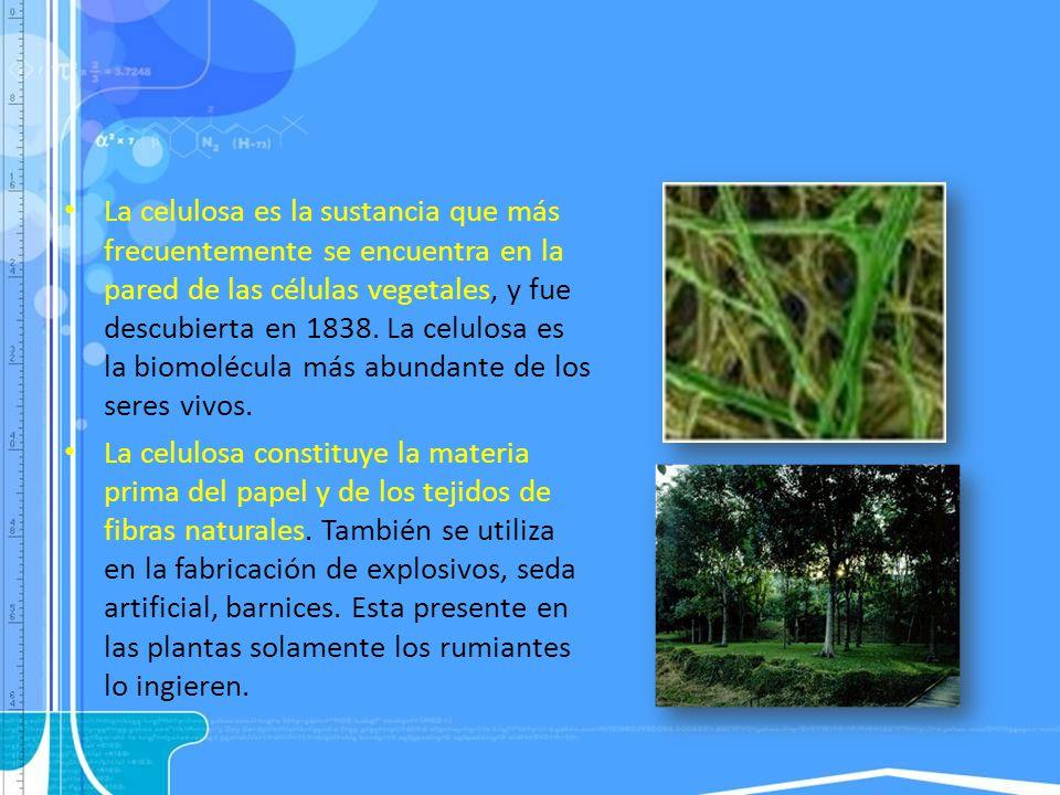 La celulosa es la sustancia que más frecuentemente se encuentra en la pared de las células vegetales, y fue descubierta en 1838. La celulosa es la biomolécula más abundante de los seres vivos.