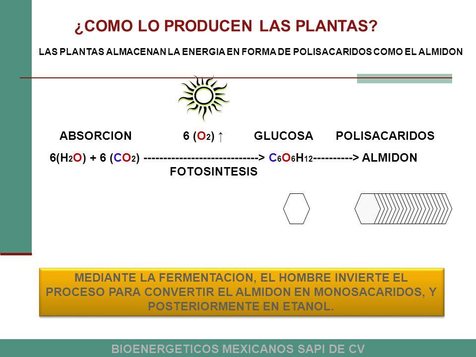 ¿COMO LO PRODUCEN LAS PLANTAS