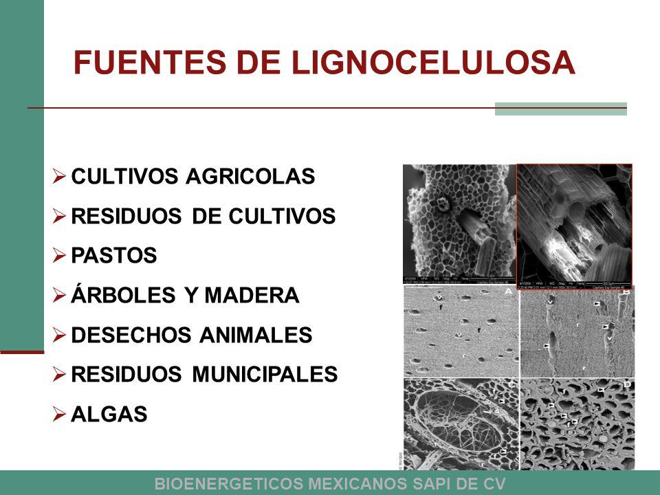 FUENTES DE LIGNOCELULOSA