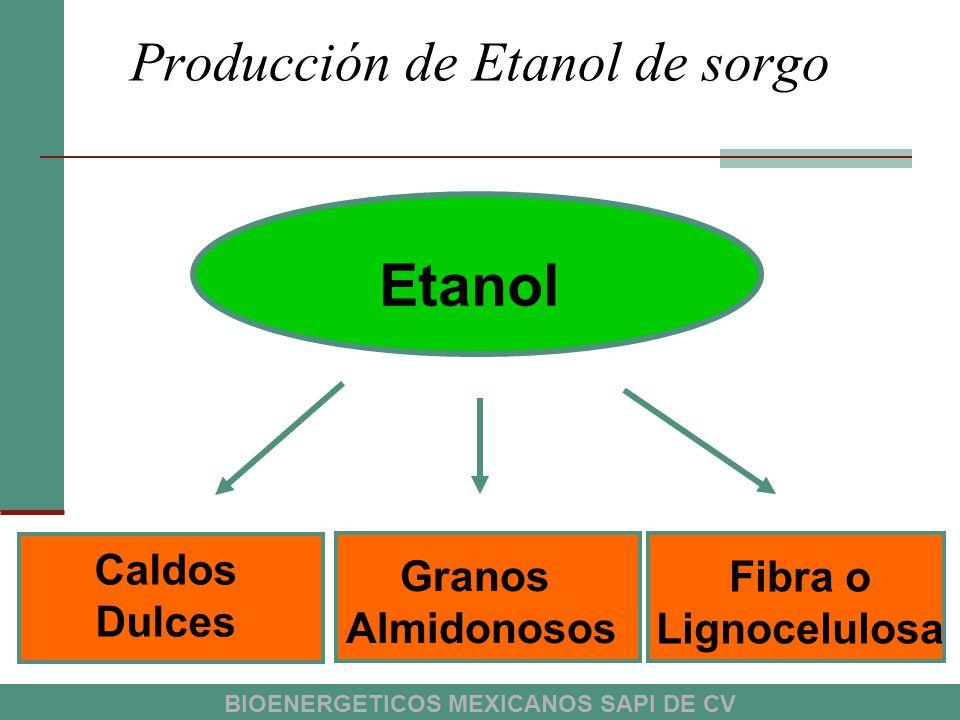 Producción de Etanol de sorgo