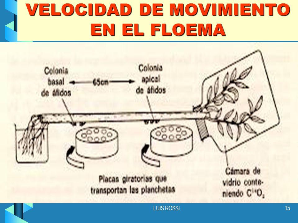 VELOCIDAD DE MOVIMIENTO EN EL FLOEMA