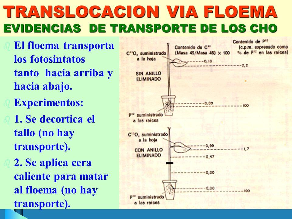 TRANSLOCACION VIA FLOEMA EVIDENCIAS DE TRANSPORTE DE LOS CHO