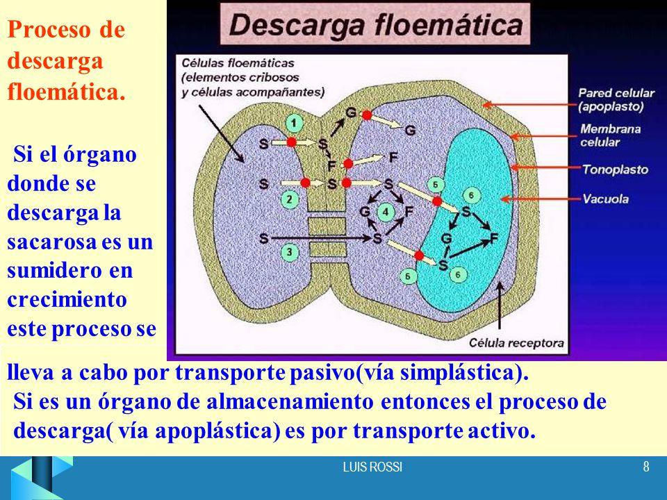 Proceso de descarga floemática