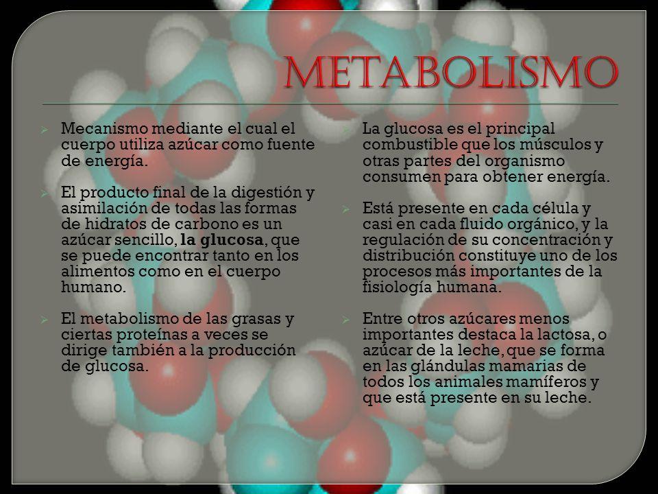 Metabolismo Mecanismo mediante el cual el cuerpo utiliza azúcar como fuente de energía.